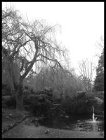 Beacon Hill Pond 2 by Grogee