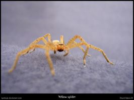 Yellow spider by Lumbule