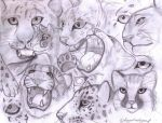 Cat sketches by forgottenlegend