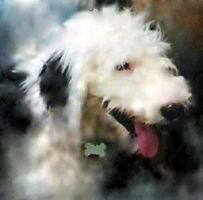 Old English Sheepdog by bewilderedconfused