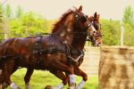 Carriage Horses. by JENNsmilee---x