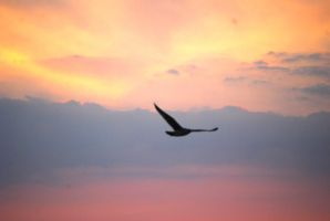 Seagull Flying by alain-angela