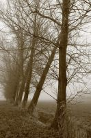 Sepia trees by RisingAngelss