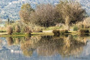 Reflections 3 by ShlomitMessica