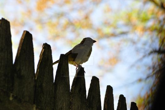 Sparrow at dusk by beautythroughalens