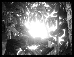 OUt Of The Canopy BW by rocker409