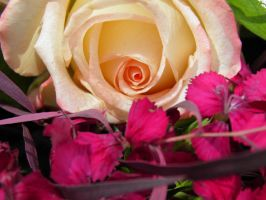 mother's day rose by bwall49