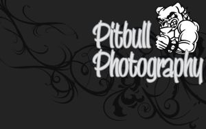Pitbull Photography by flame-design