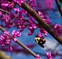 Busy Bee by DrDnar