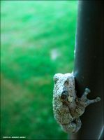 Tree Frog by Duratec