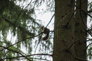 Squirrel and his mushroom by Kdv42