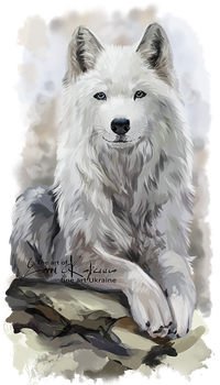 White wolf by Kajenna