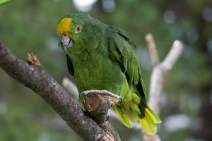 Green Parrot by PixlPhantasy