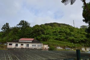 Butcher's hospital in Martinique forest 2 by A1Z2E3R