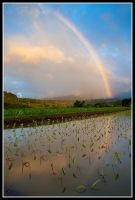 Somewhere Over The Taro by aFeinPhoto-com