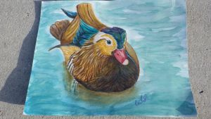 Mandarin Duck by RabidPuppy101