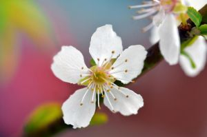When blossoms go tropical by Nikki-vdp
