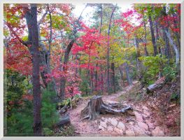 Rich Mountain Loop Hike 015 by slowdog294