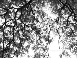 The most beautiful when you look up. by marieceleste