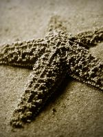 Sepia Starfish by DrivenSphere
