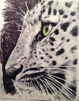 Leopard eye by celine52