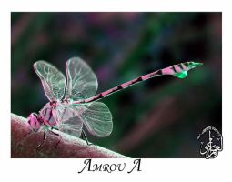 Pink green dragonfly by AMROU-A