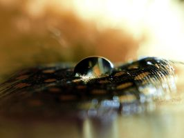 Feather and Drop (II) by Edwige-Lch