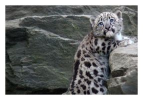 Cub Condundrum by HeWhoWalksWithTigers