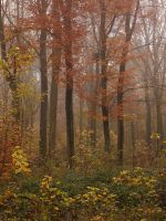 5 beeches, fog and autumn by yuushi01