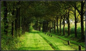 Going on a green lane by jchanders