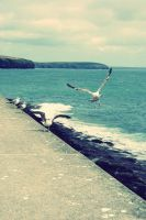 gulls . by midinettedivine93