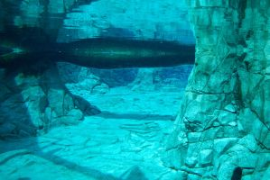 STOCK - Seaworld 2013-152 by fillyrox