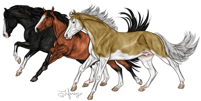 3 Horses by LianeDesigns