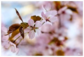 Spring passion 06of365 by PaVet-Photography