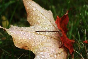 Morning Autumn Dew by Raychilwls