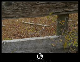Fall Fence by nevermoregraphix