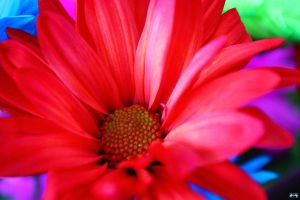 Birthday Flowers 6 by LifeThroughALens84