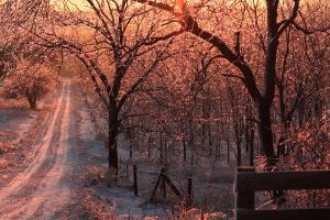 Ice Storm Sunrise by VFrance