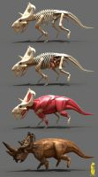 pachyrhinosaurus anatomy by epic3d
