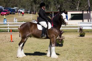 STOCK Canungra Show 2013-220 by fillyrox