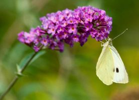 BUTTERFLY 6 by Paddy84