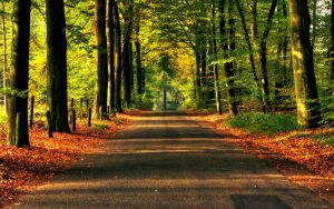 Road to autumn Wallpaper by WouterPera
