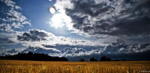 Field of Gold by JHR87