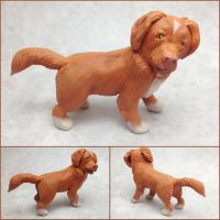 Duck Tolling Retriever Sculpture by LeiliaClay