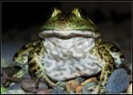 Toad 3 by DiSleXik2501