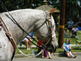 Appaloosa Parade Stock by Rising-High-Ranch