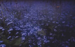 Our garden (the night is coming) by laura-makabresku