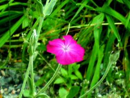 A flower from the back yard by Sunny20