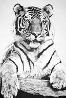 The Tiger by Meador