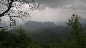 Befor Evening In Panchmadhi Jungle by sds49in